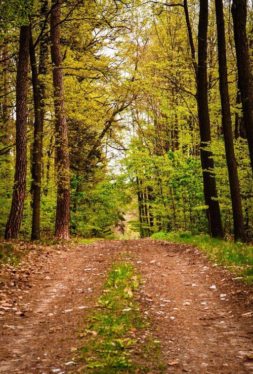 žygis,gali vaikščioti,1,Gegužė,kraštovaizdis,vežimėlis,toli,medžiai,miškas,pieva,gamta,miško takas,ruduo,vaikščioti