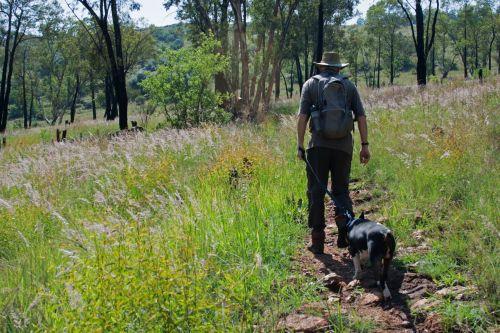keliautojas, vyras, šuo, vaikščioti, žygiai, takas, gamta, keliautojas su šunimi