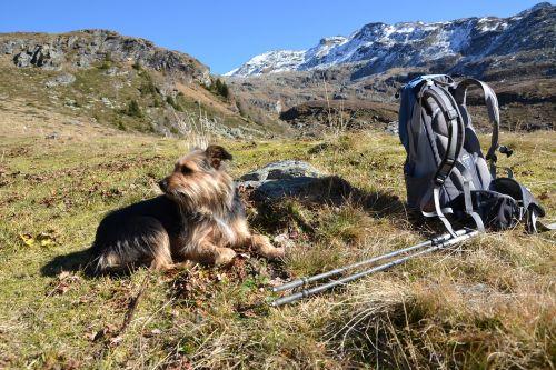 žygiai,šuo,kuprinė,kalnai,gamta,kraštovaizdis,draugas,draugas,žygis,poilsis,pertrauka