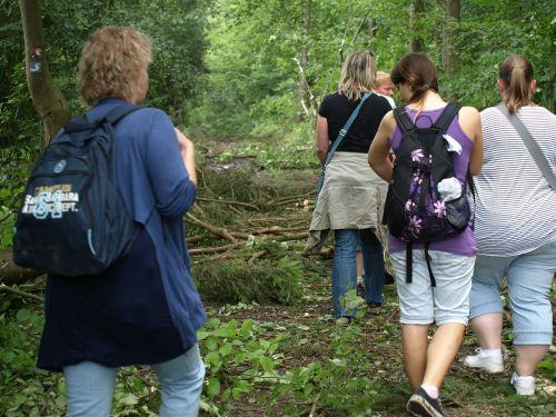 žygiai,keliautojas,grupė,Asmeninis,žmogus,miško takas,takas,gamta,miškas,toli,miško takas