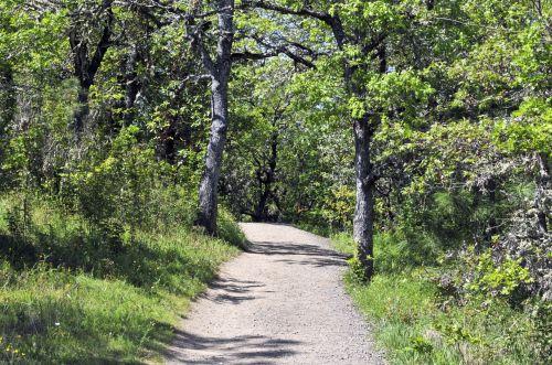 takas, purvo & nbsp, takas, žygis, žygiai, kelias, gamta, vaikščioti, augalai, žygių takas