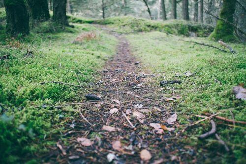 žygių takas,takas,vienas takas,kelias,pėsčiųjų takas,kelias,miškas,gamta,miško paklotė,miškai,medžiai,lazdos,filialai,žalias,žolė