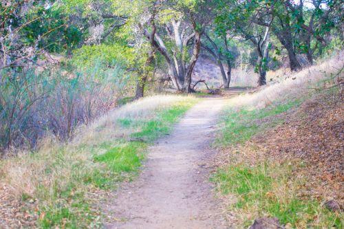 Kalifornija, purvas, purvo & nbsp, takas, aplinka, tyrinėti, miškas, žolė, gidas, žygis, žygiai, pėsčiųjų eismas, & nbsp, takas, gamta, lauke, peraugti, parkas, kelias, pietvakarius, takas, medžiai, dykuma, miškas, miškai, pėsčiųjų takas miške
