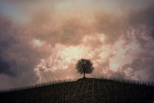 kalnas, medis, vynuogynai, debesys, gewitterstimmung, sepija, griauna