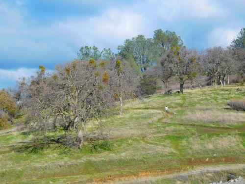 kalvos, kelias, medžiai, žygiai, folsom, Kalifornija, kalvos prie Folsomo ežero 636 m