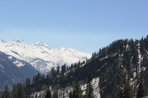 Himalajus,manali,kalvos