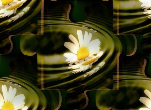 Daisy, galvosūkis, gėlė, geltona, galvosūkis & nbsp, gabalas, galvosūkiai, fonas, fono paveikslėliai
