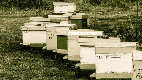 avilys,avilys,bitininkystė,bitininkystė,bityna,Žemdirbystė,tradicinis,Kipras