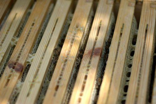 medus, rėmas, bitės, descargar medus, korio rupiniai, medaus šukos, medus ir bitininkystės produktai, avilys, bitininkas