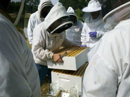 medaus BITĖ,bičių avilio patikrinimai,bityna,bitininkas,medus,bičių,avilys,bitininkystė,avilys,Apiarist,bitininkystė