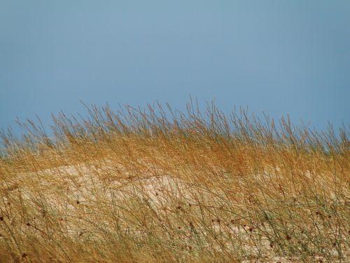 vasara, žolė, dangus, mėlynas, horizontas, saulės šviesa, diena, ruda, horizontas