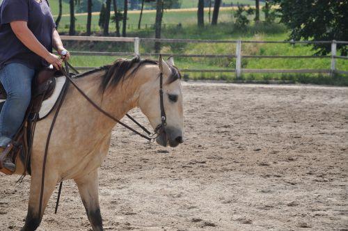 arklys,žingsnis,rait,dun,ruda,gražus,Vakarų,Vakarų jojimo