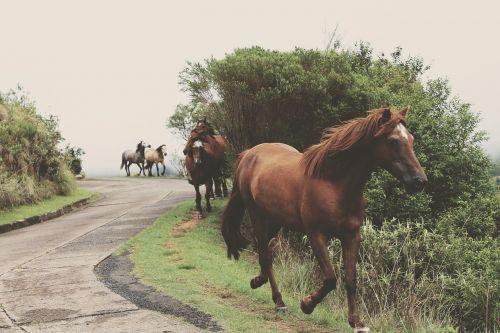 arklys,bėgimas,šokti,paleisti,žinduolis,gamta,jodinėjimas,arkliai,šokti,arkliu veikia,laisvė,gyvūnas,kaštonas,ruda,juda,judėjimas,jėga,galia,stiprus,kanopas,greitai