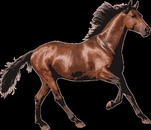 arklys,lenktynių arklys,gyvūnas,arkliai,jodinėjimas,Jodinėjimas,Jodinėjimas arkliu,nemokama vektorinė grafika