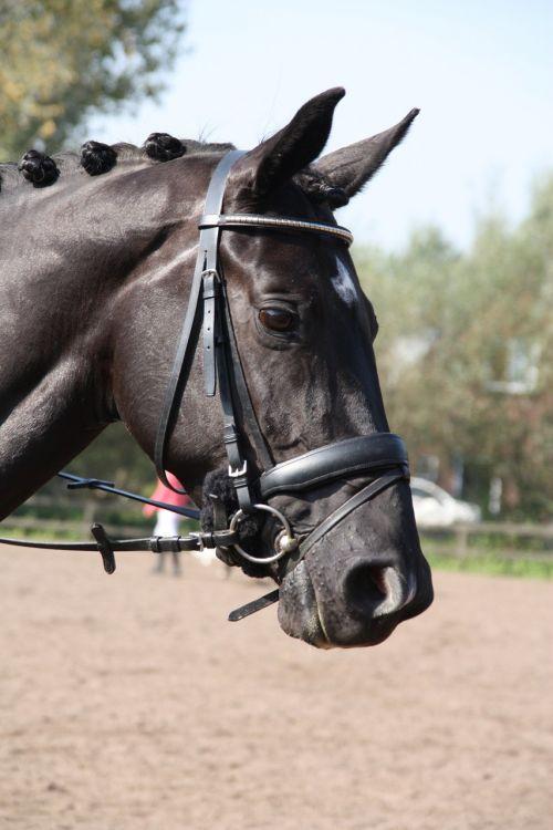 arklys,kamuoliukas,rap,išsiveržimas,važiuoti,rožė,austi