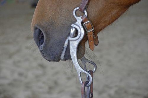arklys,kamuoliukas,pėdos,ruda,Mare,arklio galva,gyvūnų portretas,Vakarų snaflė,Vakarų jojimo