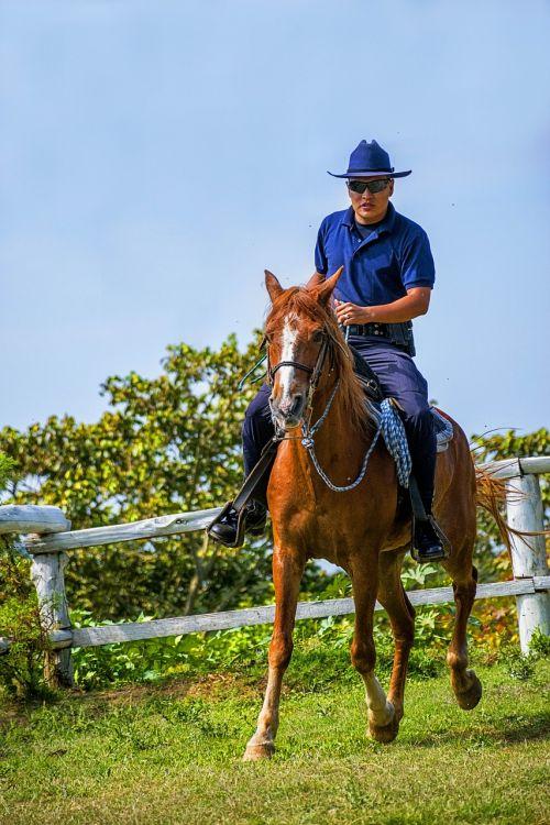 arklys,kalnas,žirgais,gamta,gyvūnas,balnas,sutramdyti,pasagos,laisvalaikis,traukinys,policija,fauna,gyvūnai,laukas,jodinėjimas,gyvuliai,rancher