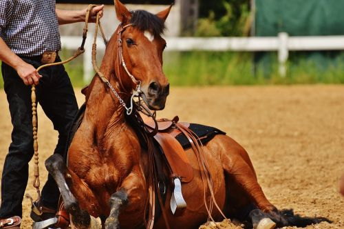arklys,Reiterhof,poilsis,sėdėti,ruda,mielas