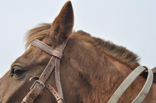 arklys,gyvūnas,akis,ausis,kailis,ausis,galva,kamuoliukas
