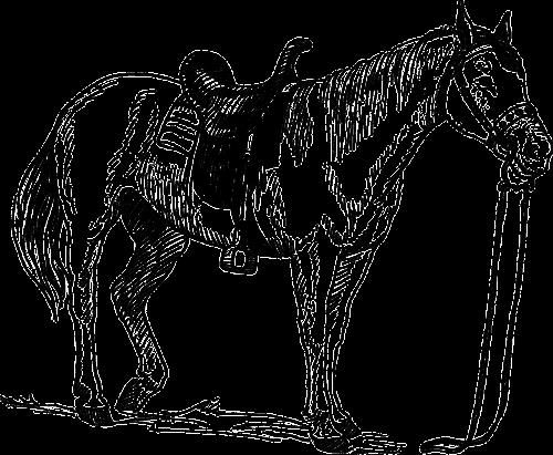 arklys,gyvūnas,žinduolis,Jodinėjimas,jodinėjimas,Jodinėjimas arkliu,jojimo sportas,nemokama vektorinė grafika