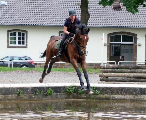 arklys,universalumas,karinis jodinėjimas,universalumo tyrimas,įvykis,arkliukas,vanduo,Reiter,mokymas,melding,gilus krekas,vandens pavojus,šokti,šokti šuoliais,šilta krauju