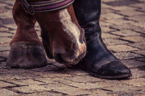 arklys,Huf,batai,arklio kanopas,pėdos,gyvūnas