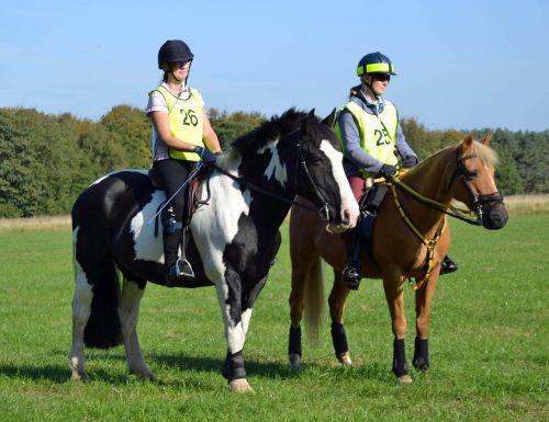 arklys,Jodinėjimas,jodinėjimas,arklys,lauke,vasara,Žiurkė,gyvenimo būdas,Sportas,arkliai,gyvūnas,važiuoti,piebaldas,cob,kaštonas,jodinėjimas,šokti,žemės ūkio paskirties žemė