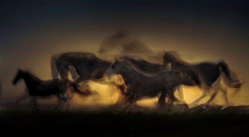 arklys,saulėlydis,balnas