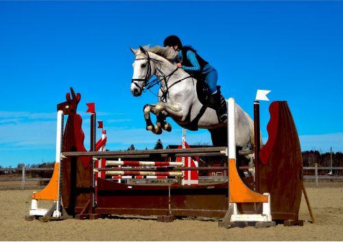 arklys,arkliai,rodyti džiaugsmą,arkliai,šokinėja,raitelis,Jodinėjimas,Sportas,jodinėjimas,Jodinėjimas arkliu