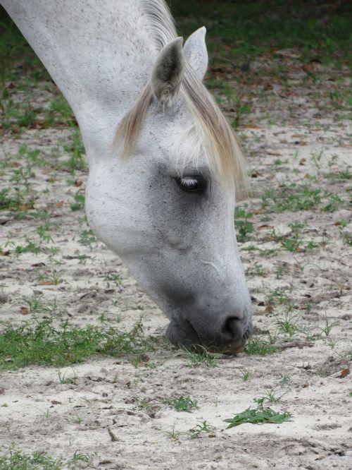 arklys,smėlis,munching,raumenys,lankstymas