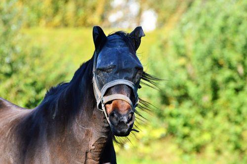 arklys,skraidanti skrybėlė,skristi dangtelis,apsauga,skristi,balno žirgas,galvos apsauga nuo skydų,vabzdžių apsauga,skristi kauke,važiuoklės reikmenys,jungtis,gyvūnas
