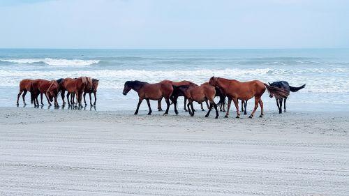 arklys,papludimys,vandenynas