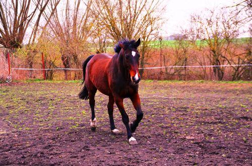 arklys,gyvūnas,važiuoti,šokti,rait