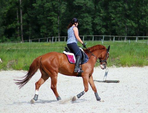arklys, mokymas, pratimas