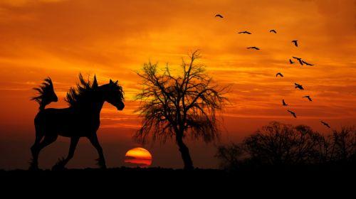arklys,Arabas,saulėlydis,mediena,krūmai,rait,paukščių siluetai