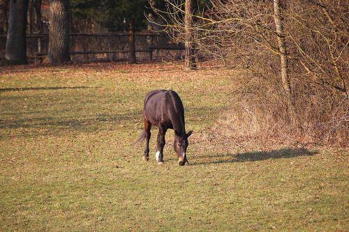 arklys,jungtis,ganykla,ganyti
