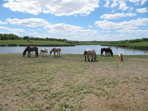 arklys,eržilas,Mare,gyvūnas,važiuoti,melding,ūkis,cicindela