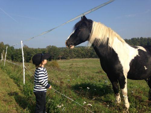 arklys, vaikai, hage