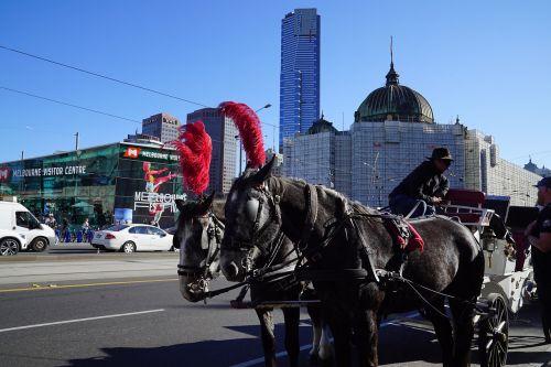 arklio ir vežimėlio važiavimas,melburno miestas,fantazijos važiavimas,elegantiškas transportas,honoraras,plunksnoti arkliai