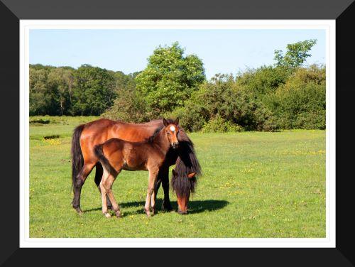 arklys, kumeliukas, ponis, naujas & nbsp, miško & nbsp, ponis, kaimas, spausdinti, rėmas, įrėminti, įrėminti & nbsp, spausdinti, framed & nbsp, nuotrauka, Laisvas, viešasis & nbsp, domenas, arklio ir kumelės rėminė spauda