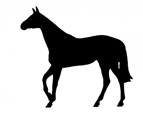 arklys, juoda, arkliai, gyvūnas, siluetas, grynas, rasė & nbsp, arklys, gražus, menas, iliustracija, balta, fonas, Laisvas, viešasis & nbsp, domenas, arklys juodas siluetas