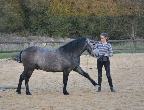arklių mergina,komplikacija,sporto jojimo,naudotis žaidimų aikštele,gamta