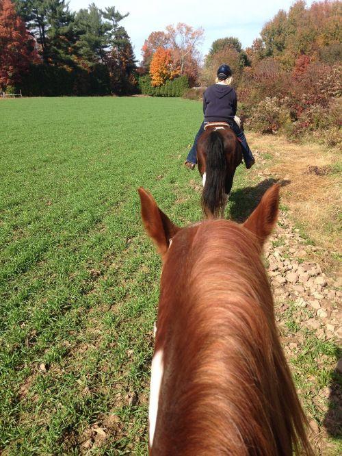 arkliai,važiavimo takas,Jodinėjimas,arklys,takas,važiuoti,arkliai,lauke,veikla,jodinėjimas,asmuo,poilsis,suaugęs,žirgais,Jodinėjimas arkliu,gamta,kaimas,moteris,Mare