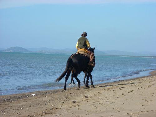 arkliai,papludimys,twilight