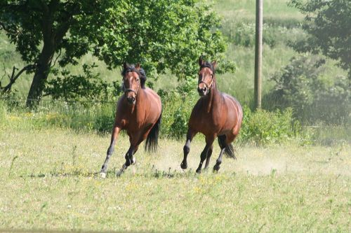 arkliai,lazdelės,šokti