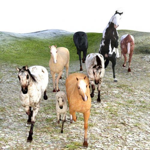 arkliai,flock,laukiniai laukiniai laukiniai žirgai,grynas arabiškas,paddock,ganykla,Mare,važiuoti,jungtis,ganyti,pelėsiai,laukinė gamta,šokti,gamta,vasara,žolė,Žiurkė