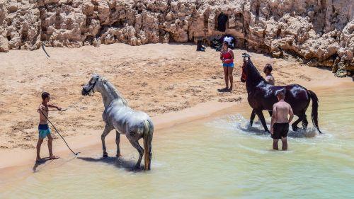 arkliai,vonia,maudytis,papludimys,gaivus,šiluma,maudytis,Kipras