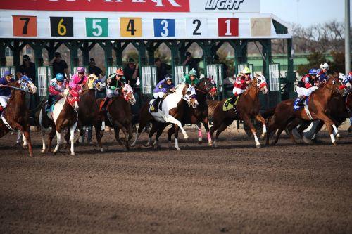 arkliai,žirgų lenktynės,racetrack,Žirgų lenktynės,jockey,lenktynės,lenktynės,raitelis,arklys,grynas