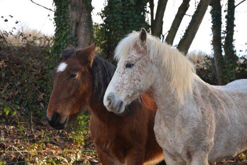 arkliai,arklinių šeimos gyvūnai,melding,Mare,Jodinėjimas arkliu,gamta,prairie,broodmare