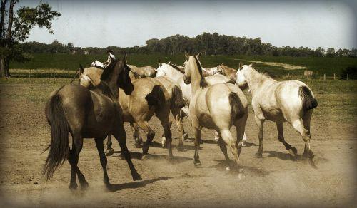arkliai,gyvūnas,eržilas,laukiniai,ūkis,žinduolis,vidaus,lauke,ūkio gyvūnai,kaimas,gyvuliai,ranča,Naminiai gyvūnai,žemės ūkio paskirties žemė